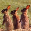 Having 334 bunnies in your backyard may land you a citation.