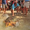 Turtle named after Obama set free on Independence Day.