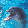 Chicago woman decides to sue local zoo over splashing dolphins.