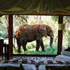 Seven amazing and luxurious South Africa Safari Lodges for you to gawk at.