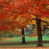 Want to know why fall colors vary between continents?