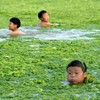 Over in China beach-goers are enjoying a healthy swim in algae-filled waters.